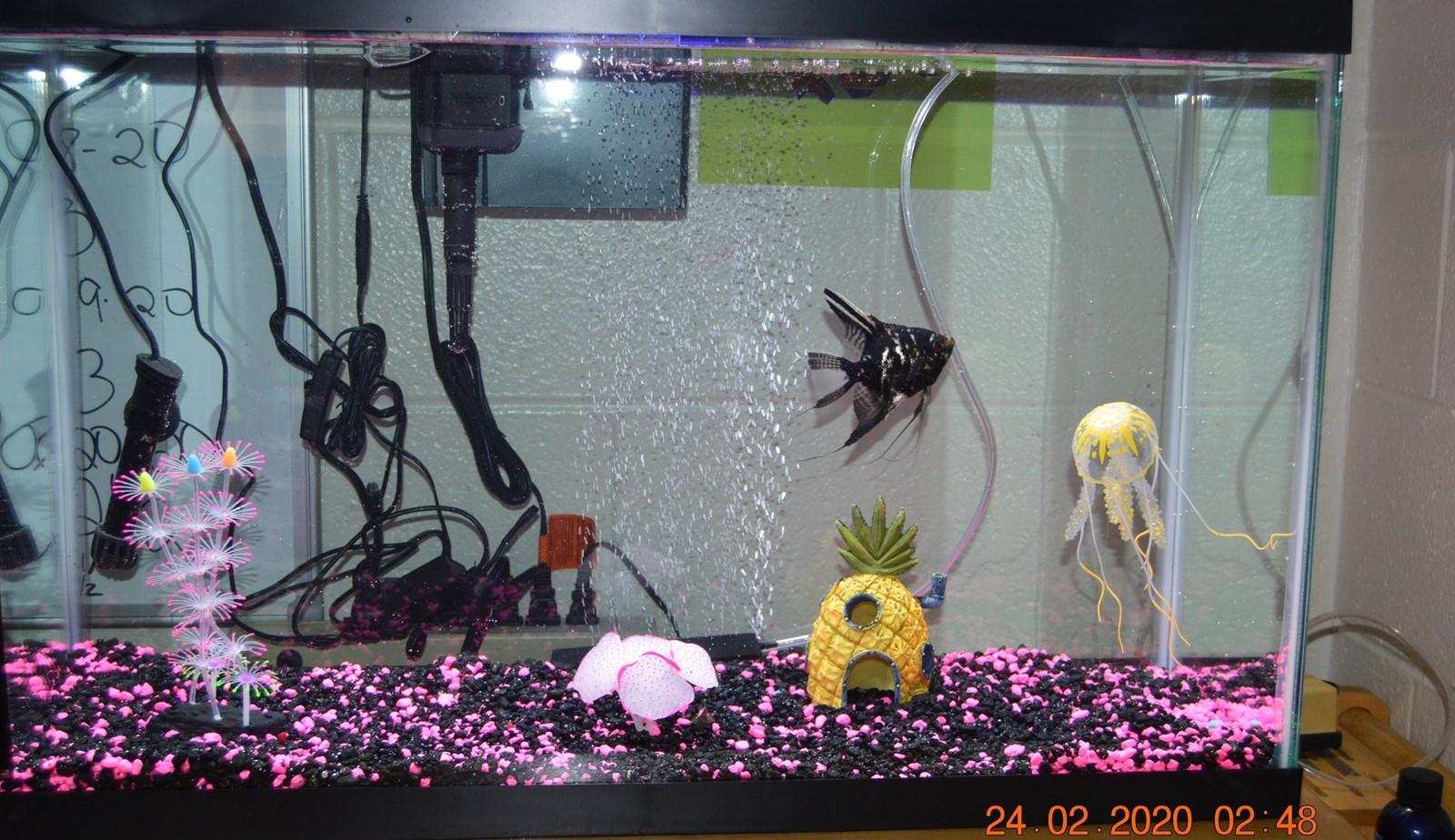 Fish tank in ERC